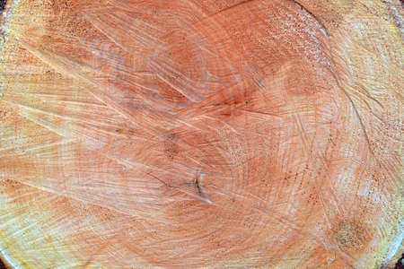 Tree trunk cross-section (top view). on a surface rings, knots, saw traces, sawdust and bark are visible.