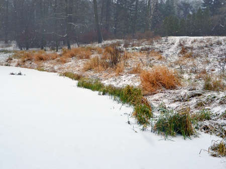 Landscape. Snowfall on the bank of the lake. White snow falls on ice of the lake and a coastal grass. Dark forest on a background. The image can be used as a background.