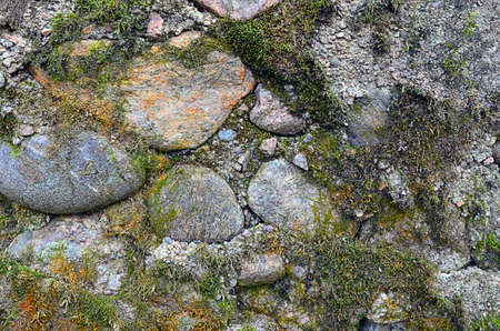 abstract background. fragment stone wall made ?? of granite boulders and cobbles, covered with moss closeup