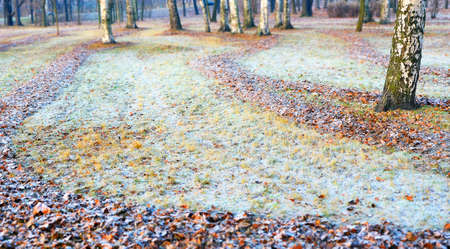 Autumn frosts in the gardens. The heaps of bright fallen leaves lit with the sun form beautiful curves on ground. One thick trunk of a birch in the foreground at the left. Standard-Bild