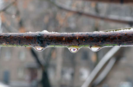 The overcooled rain, wind and cold form an ice layer on a tree branch