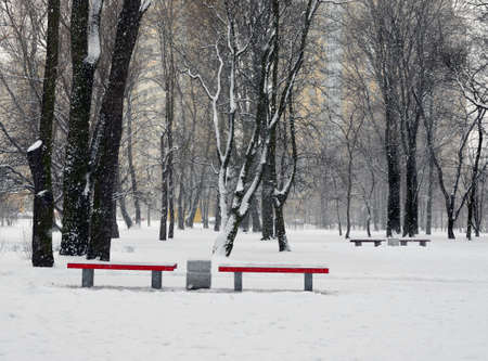 Two red benches in the gardens during snowfall against dark trees and yellow city houses / Standard-Bild