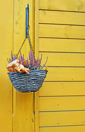 Hanging baskets with heather and fallen-down dry maple leaves on wooden wall.