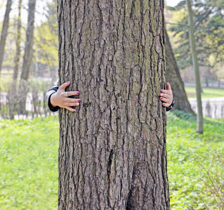Trunk of big ancient pine and hand of woman embracing tree. It is believed that nature has energy and gives it away. Touching some trees helps make dreams come true. Love to nature.