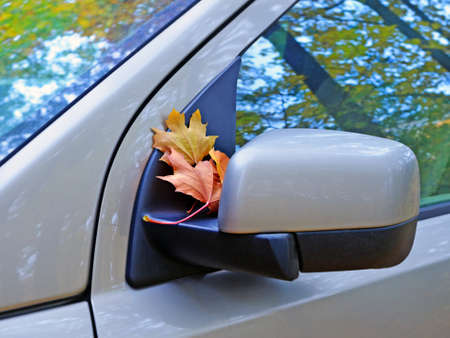 Car fragment infall. Dry maple leaves fell on rearview mirror. Dusty windows reflect yellow trees and sky. Standard-Bild