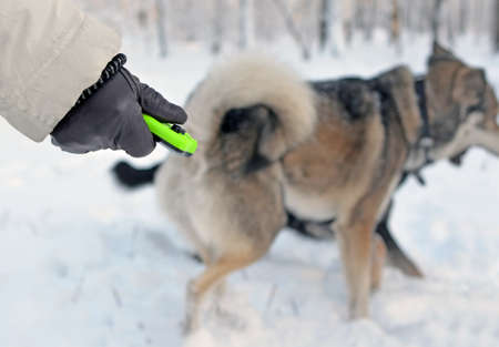 Break in training. Hand in glove with clicker against blur background of playing dogs in winter.