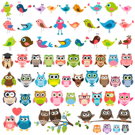 birds: set of cartoon colorful birds and owls