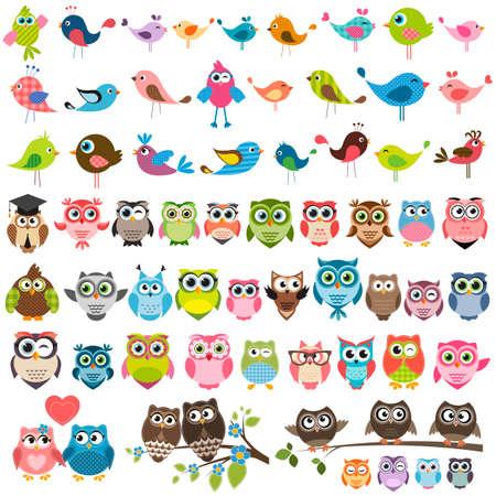 sowa: Zestaw cartoon kolorowych ptaków i sowy Ilustracja