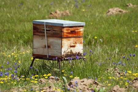 Une ruche et les abeilles dans un champ fleuri, Afrique du Sud Banque d'images - 18101105