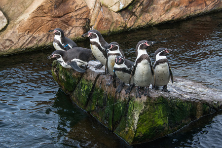 A group of penguins on a rock Stock Photo