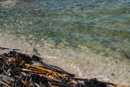 alga marina: olas en una playa con algas en él