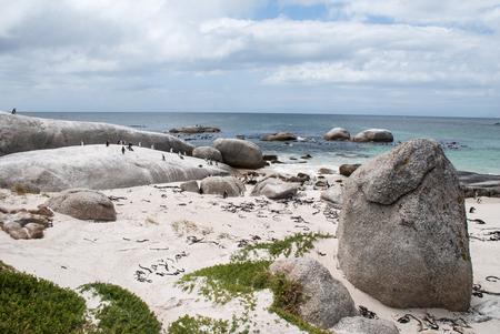 pinguinera: Colonia de ping�inos africanos en la playa de cantos rodados, Sud�frica