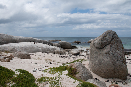 pinguinera: The penguin colony on Boulders Beach, South Africa