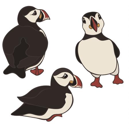 Ensemble de vecteurs de macareux isolé sur fond blanc. Oiseau macareux dans différentes poses et vue. Macareux moine islandais de dessin animé mignon. Vue arrière, avant et latérale. Oiseau noir et blanc au bec multicolore.