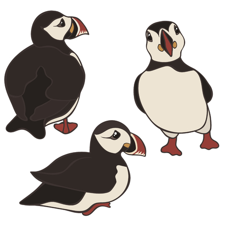 Puffin vector set isolated on white background. Puffin bird in different poses and view. Cute cartoon Icelandic puffin. Back, front and side view. Black and white bird with multicolored beak.