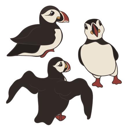 Ensemble de vecteurs de macareux isolé sur fond blanc. Oiseau macareux dans différentes poses et vue. Macareux moine islandais de dessin animé mignon. Vue arrière, avant et latérale. Oiseau noir et blanc au bec multicolore. Vecteurs