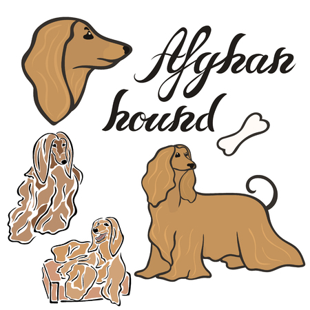 Afghan hound dog breed vector illustration set isolated. Doggy image in minimal style, flat icon. Simple emblem design for pet shop, zoo ads, label design animal food package element. Gun dog sign.