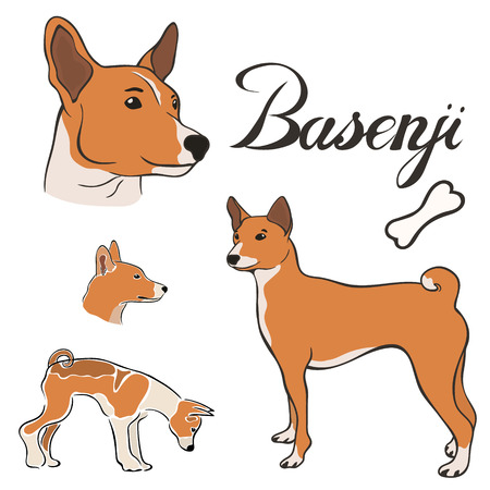 Basenji dog breed vector illustration set isolated. Doggy image in minimal style, flat icon. Simple emblem design for pet shop, zoo ads, label design animal food package element. Gun dog sign.