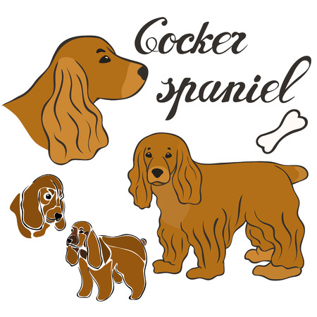 Cocker spaniel dog breed vector illustration set isolated. Doggy image in minimal style, flat icon. Simple emblem design for pet shop, zoo ads, label design animal food package element. Gun dog sign.