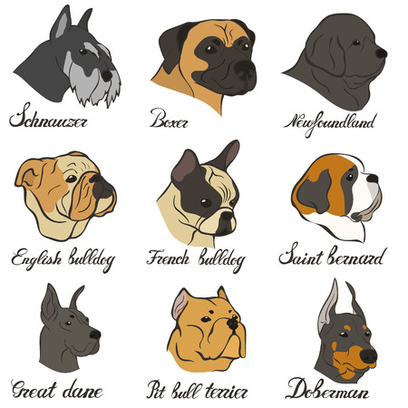 Bulldog, french bulldog, newfoundland pit bull terrier FCI Pinscher and Schnauzer breeds of universal appointment.