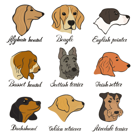 Afghan hound, bearded terrier and basset hound FCI hound, terrier, beagle and related breeds.