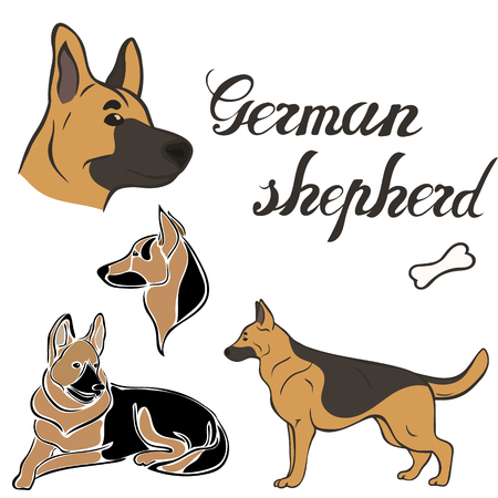 German shepherd dog breed vector illustration set isolated. Doggy image in minimal style flat icon. Simple emblem design pet shop, zoo ads, label design animal food package element. Realistic dog sign Vettoriali