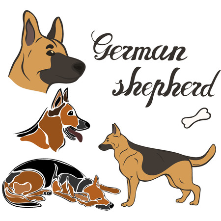 German shepherd dog breed vector illustration set isolated. Doggy image in minimal style flat icon. Simple emblem design pet shop, zoo ads, label design animal food package element. Realistic dog sign Vectores