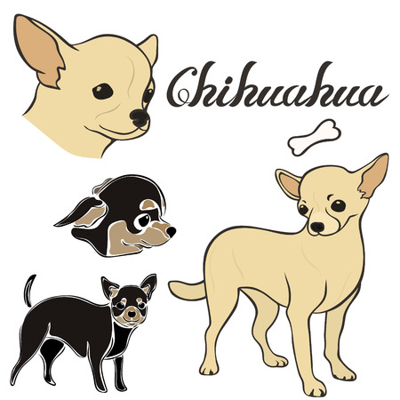 Chihuahua dog breed vector illustration set isolated. Doggy image in minimal style, flat icon. Simple emblem design for pet shop, zoo ads, label design animal food package element. Realistic dog sign