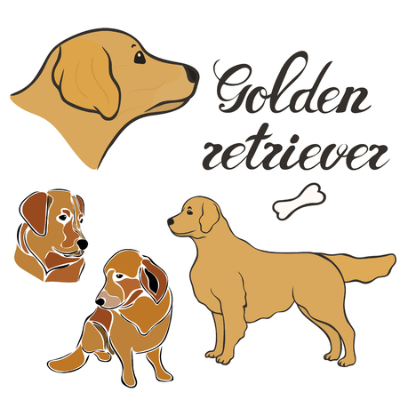 Golden retriever dog breed vector illustration set isolated. Doggy image in minimal style, flat icon. Simple emblem for pet shop, zoo ads, label design animal food package element. Realistic dog sign