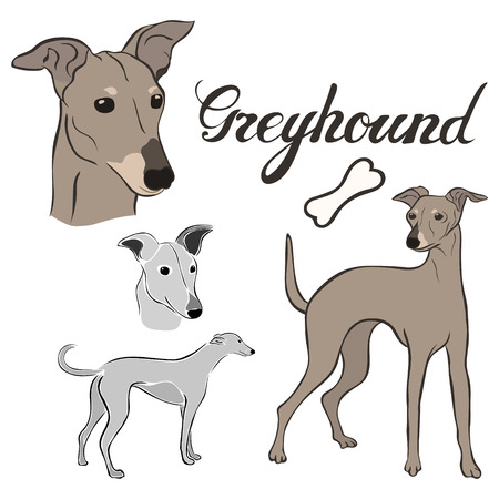 Greyhound dog breed vector illustration set isolated. Doggy image in minimal style, flat icon. Simple emblem design for pet shop, zoo ads, label design animal food package element. Realistic dog sign