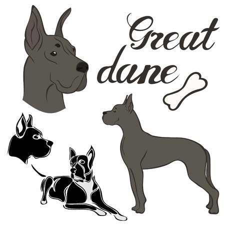 Great dane dog breed vector illustration set isolated. Doggy image in minimal style, flat icon. Simple emblem design for pet shop, zoo ads, label design animal food package element. Realistic dog sign Vettoriali