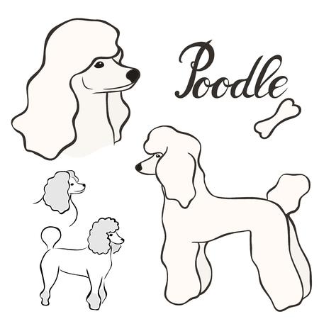 Conjunto de ilustración de vector de raza de perro caniche aislado. Imagen de perrito en estilo minimalista, icono plano. Diseño de emblema simple para tienda de mascotas, anuncios de zoológico, diseño de etiquetas, elemento de paquete de alimentos para animales. Signo de perro realista
