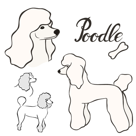 Poodle dog breed vector illustration set isolated. Doggy image in minimal style, flat icon. Simple emblem design for pet shop, zoo ads, label design animal food package element. Realistic dog sign