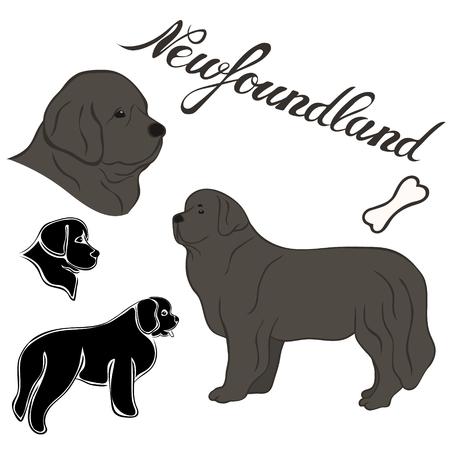 Ensemble d'illustrations vectorielles de race Terre-Neuve isolé. Image de chien dans un style minimal, icône plate. Conception d'emblème simple pour animalerie, publicités de zoo, élément d'emballage d'aliments pour animaux de conception d'étiquettes. Signe de chien réaliste Vecteurs