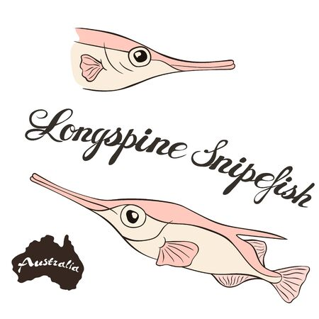 Longspine snipefish vector isolated on white background. Australian snipefish in full growth Fauna Australia. Little pink fish with long nose. Bristle snipefish or long-spined snipefish. Иллюстрация