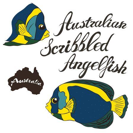 Australian scribbled angelfish vector image isolated on white background. Australian angelfish in full growth Fauna Australia. Australian scribbled angelfish fish realistic design.