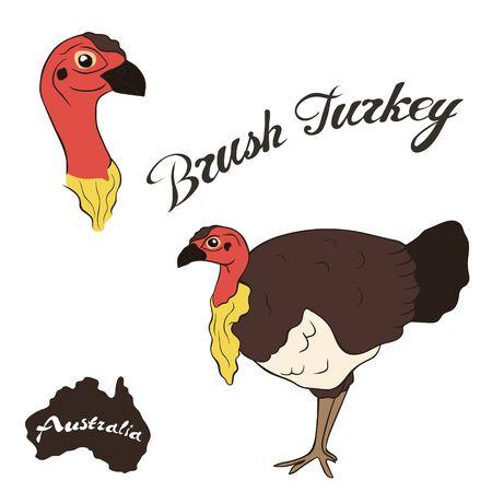 Brush turkey vector image isolated on white background. Australian Brush-turkey Fauna Australia. Red-billed Brush-turkey bird realistic design. Cuvier's brushturkey.