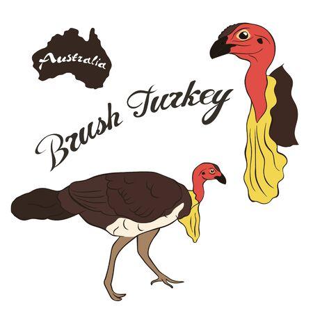 Brush turkey vector image isolated on white background. Australian Brush-turkey Fauna Australia. Red-billed Brush-turkey bird realistic design. Cuviers brushturkey.