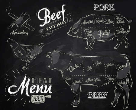 macellaio: Gesso Illustrazione di un elemento grafico d'epoca sul menu per bistecca di carne di pollo, maiale mucca diviso in pezzi di carne