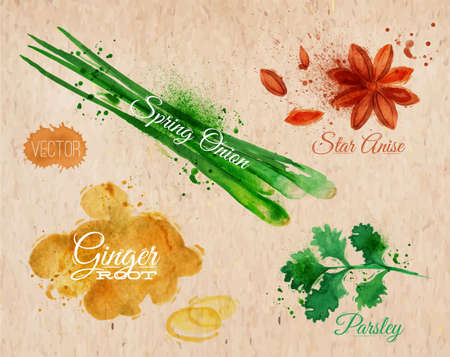 spices and herbs: Spices herbs set drawn watercolor blots and stains with a spray star anise, parsley, spring onion, ginger root  on kraft paper