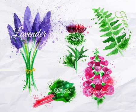 花草描かれた水彩画しみとスプレーのラベンダー、アザミ、フォックスグローブス、シダ、ルバーブで汚れを設定