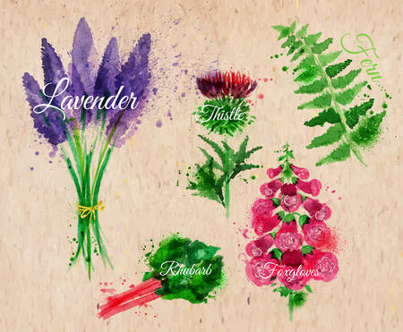 rhubarb: Flower grass set drawn watercolor blots and stains with a spray lavender, thistle, foxgloves, fern, rhubarb on kraft paper