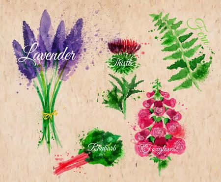 Gras Satz gezeichnet Aquarell Blots und Flecken mit einem Spray Lavendel, Distel, Fingerhut, Farn, Rhabarber auf Packpapier