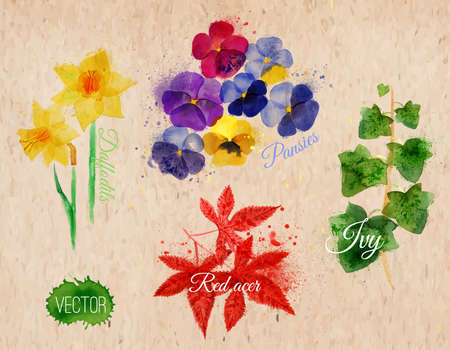 acer: Flower grass set drawn watercolor blots and stains with a spray daffodils, pansies, ivy, red acer on kraft paper