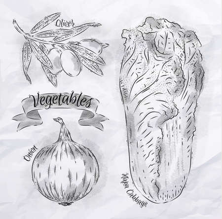 napa: Vegetables onion, napa cabbage, olives vintage Illustration