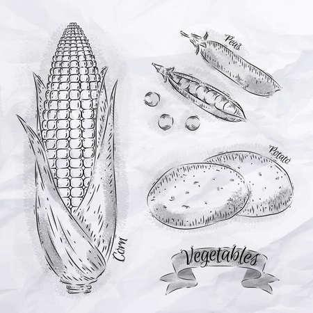 potato plant: Vegetables painted in vintage style corn, peas, potatoes Illustration