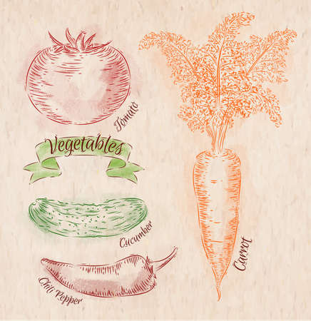 Vegetables carrot, tomato, chili peppers, cucumber country Vector