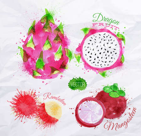 Exotic fruit set drawn watercolor blots and stains with a spray dragon fruit, rambutan, mangosteen