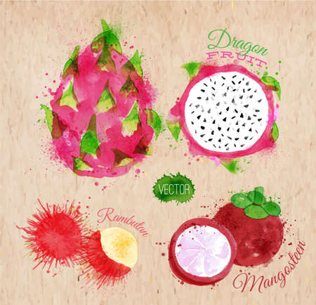 rambutan: Exotic fruit set drawn watercolor blots and stains with a spray dragon fruit, rambutan, mangosteen in kraft Illustration