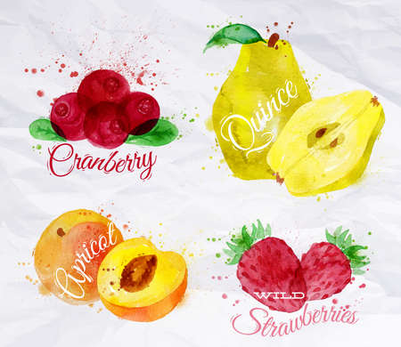 cranberry illustration: Fruit set drawn watercolor blots and stains with a spray cranberry, quince, apricot, wild strawberries Illustration